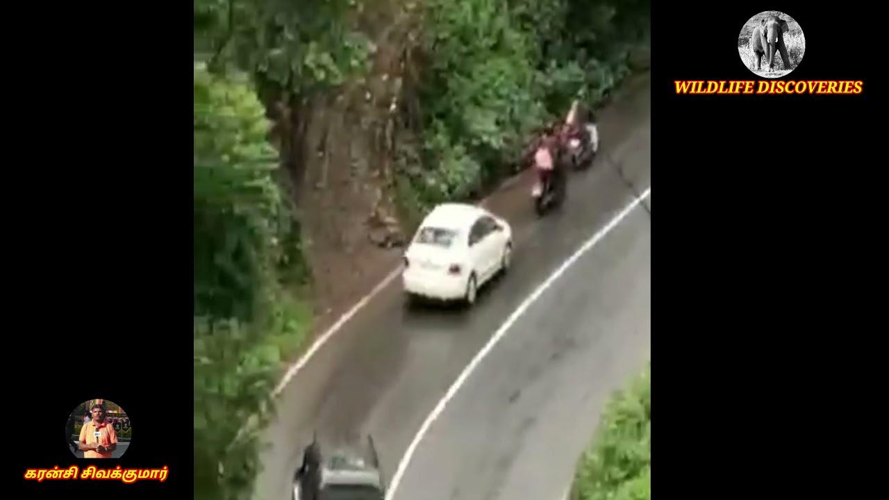 Bear crossing at Ooty Main Road || எல்லாநல்லி பகுதியில் கரடிகள் சாலையை கடக்கும் காட்சி