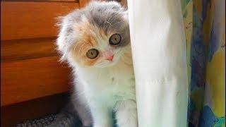 Она съела ВСЮ мою еду! БЕДНЫЙ маленький КОТЕНОК и большая кошка на трех лапках // Видео для детей