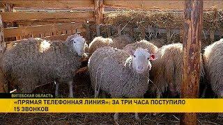 Прямая телефонная линия: жители деревни Батали под Витебском опасаются экологической проблемы