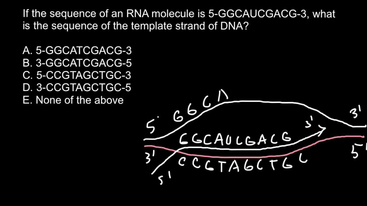 How to find sequence of the template strand of dna youtube for What is a template strand