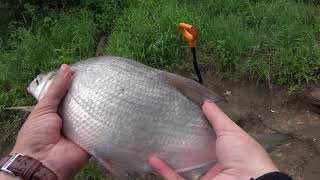 Рыбалка на донки Ловля леща на фидер Рыбалка на Оке Река Ока Алексин