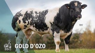 GOLD D'OZO - Portes ouvertes BBG 2017