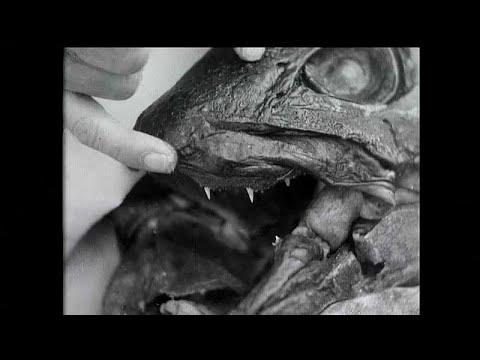 علماء يحاولون حل لغز -السمكة الديناصور-  - نشر قبل 3 ساعة