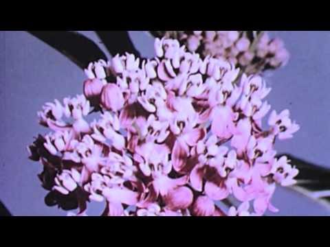 Tei Shi - Nevermind The End (Lil Sad Remix) ❀