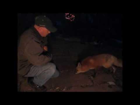 Foxy Visits