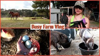 More Babies Coming | Farm Vlog