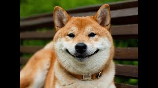 """Пушистый фестиваль """"Гав гав"""" г. Ижевск.Собаки."""