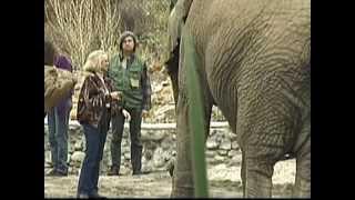 Tippi & Elephant