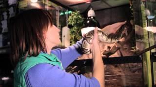 Все О Домашних Животных: Питон Необыкновенный