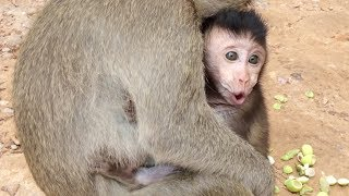 Monkey cry - Teenage monkey kidnapped baby monkey - Baby monkey cry part 2