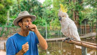 Bird sings with beatbox harmonica