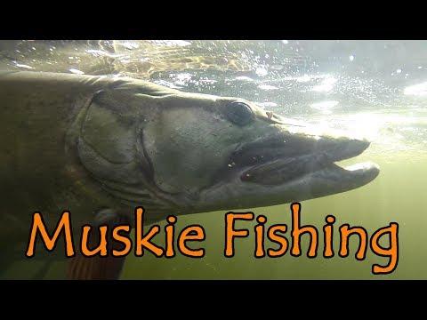"Muskie Fishing On The ""Johnny"" Canada 2018-Underwater Views!"