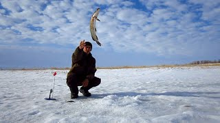 весенний бешеный клев щуки рыбалка в марте 2020 казахстан акмолинская область