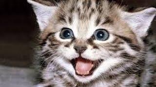 Αστείο Και Χαριτωμένο Γάτα Ήχους - Κατάρτιση Της Γάτας