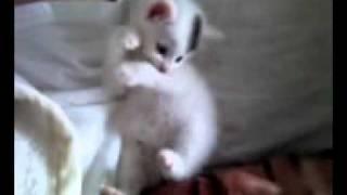 超かわいい子猫ちゃん~天国へ行った子猫のふわちゃん☆天国編