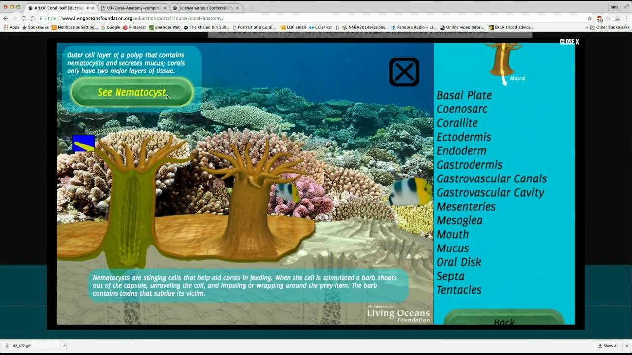 Coral Reef Ecology Curriculum Teacher Training Youtube