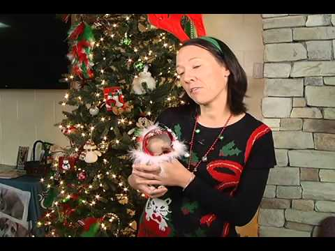 Fairfax County Animal Shelter: Ugly Sweater Day