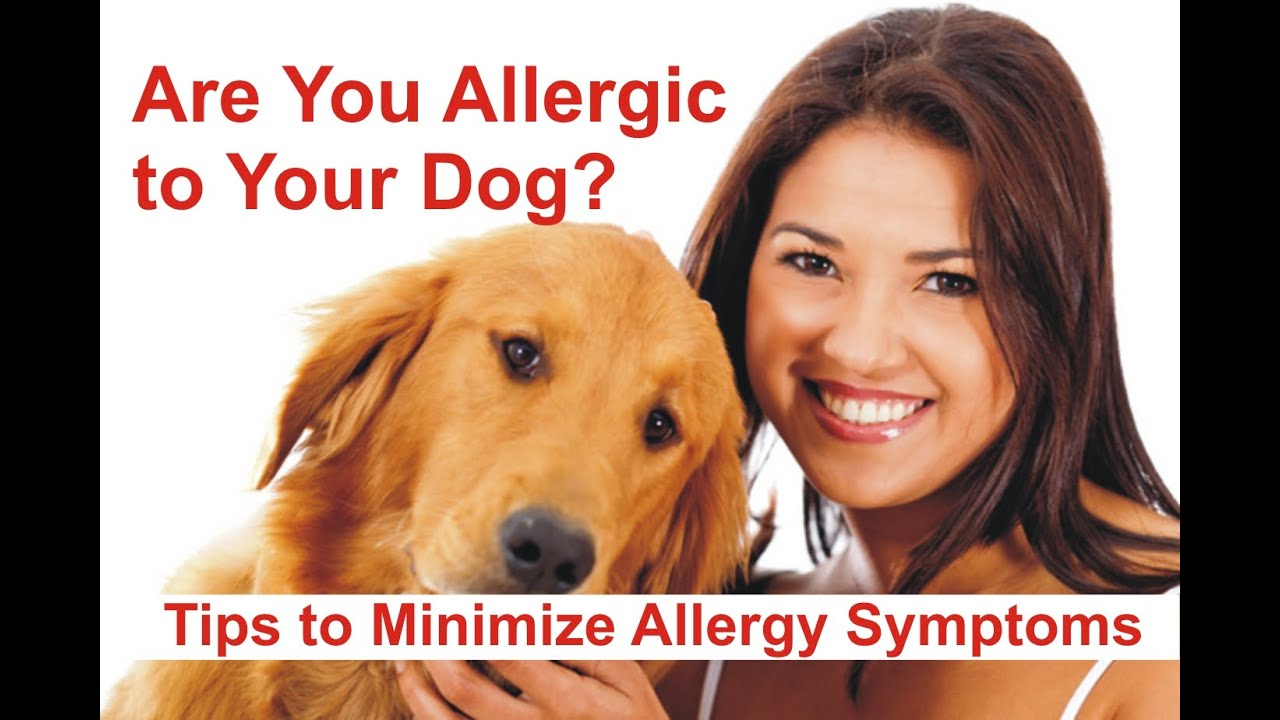 Are You Allergic To Your Dog Tips To Minimize Allergy Symptoms