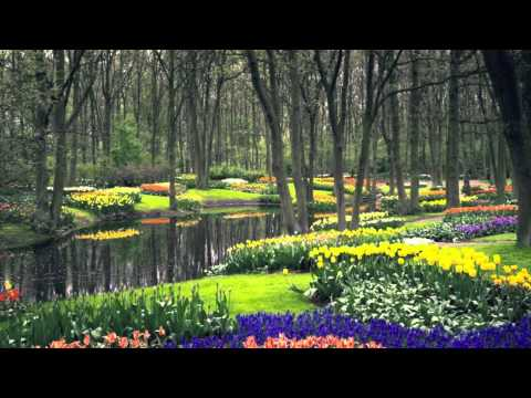 Musica Rilassante - Spring e Motion (Dream Cut) S.O.F.T.