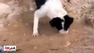 مدهش .. كلبة عراقية تدفن رضيعها