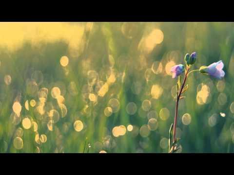 Bloom - The Paper Kites - Español Sub.