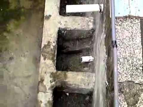 Mi estanque de cemento para el cultivo y crianza de for Estanque de concreto