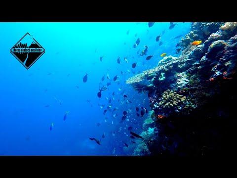 Der Tanz der Adlerrochen | Wakatobi | Indonesien • Vlog #78