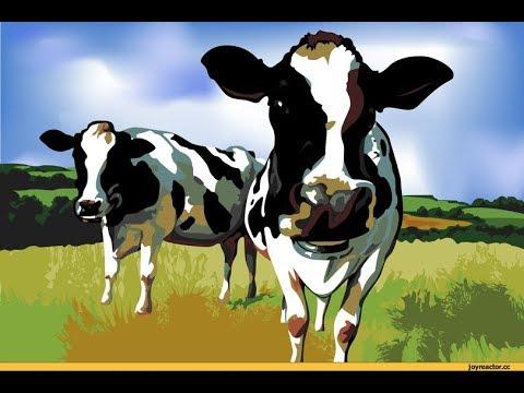 Мужчина занимается сеском с коровой