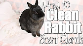 5 EASY TIPS TO GET YOUR RABBIT TO EAT HAY! - YouTube