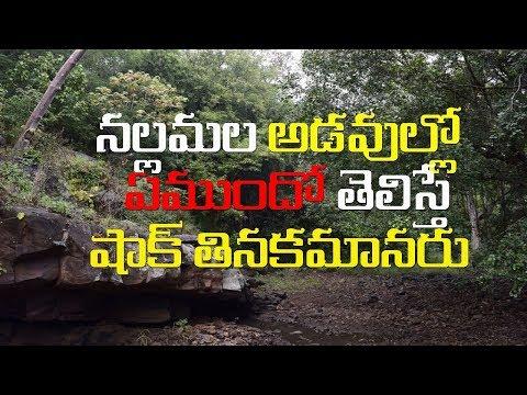 ishtakameswari temple srisailam | wonderful experience of forest drive in nallamala forest|teerthaya