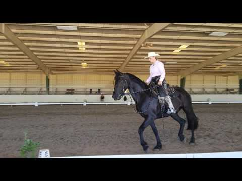 Lil Ricky with Megan Gallagher at Rancho Miretta Cowboy Dressage June 2016