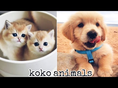 Funny cat - Cute and Funny Baby Cat and dog Videos Compilation #43 || koko animals
