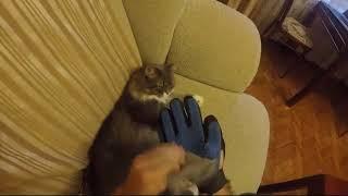 Перчатка для вычесывания шерсти у кошек и собак отзыв