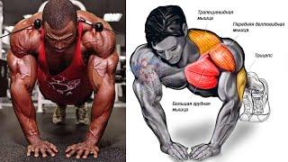 تمارين الضغط 8 انواع (بوش اب) واستهداف كل تمرين | push ups