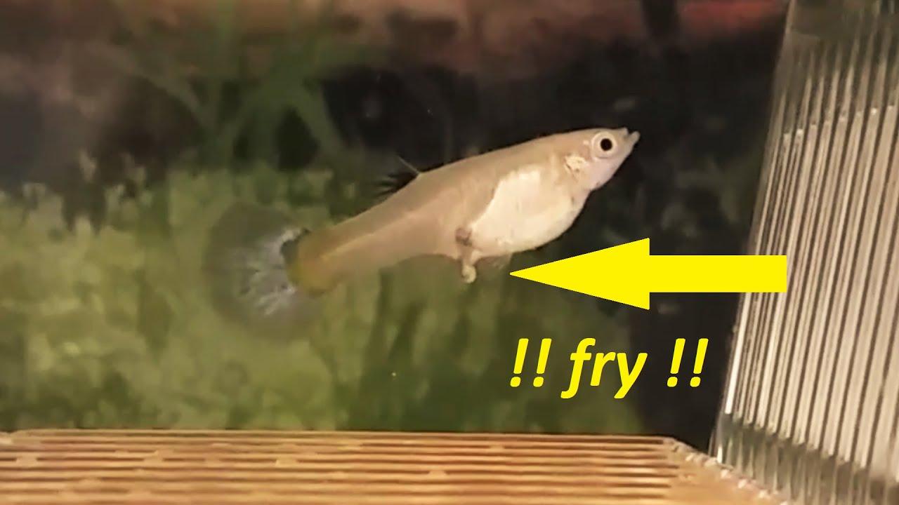 How To Make Diy Siphon Vacuum Gravel Cleaner For Small Tanks Betta Fish Tank Breeding Box Youtube