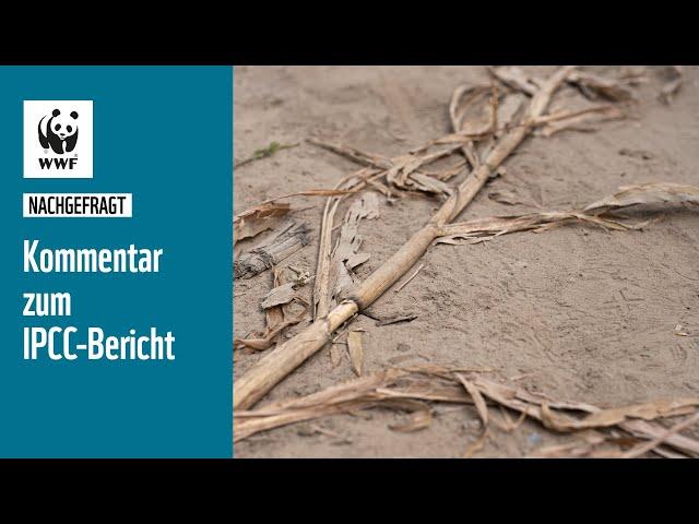 Kommentar zum IPCC-Bericht   #nachgefragt   WWF Deutschland