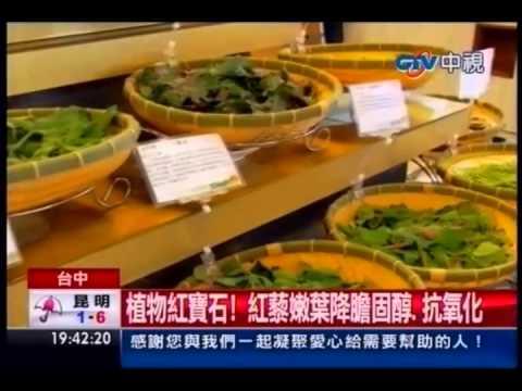 無毒野菜吃下健康不怕胖 養生蔬菜鍋清淡爽口