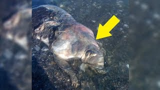 5 Real Life Monsters That Appeared Out Of Nowhere!