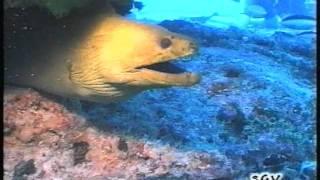 cuba squali