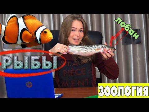 Рыбы. Общая характеристика. Урок биологии №78.
