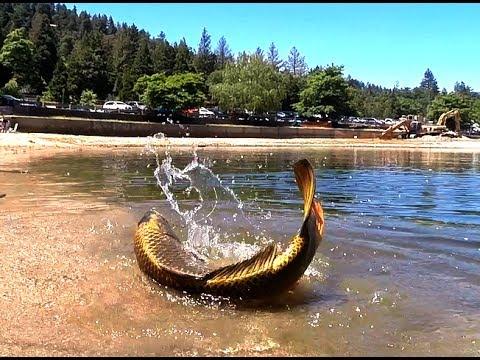 Zen of fishing lake gregory youtube for Lake gregory fishing report