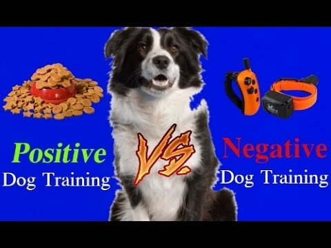WARNING! Extremely Controversial!  Positive Dog Training vs Negative Dog Training!