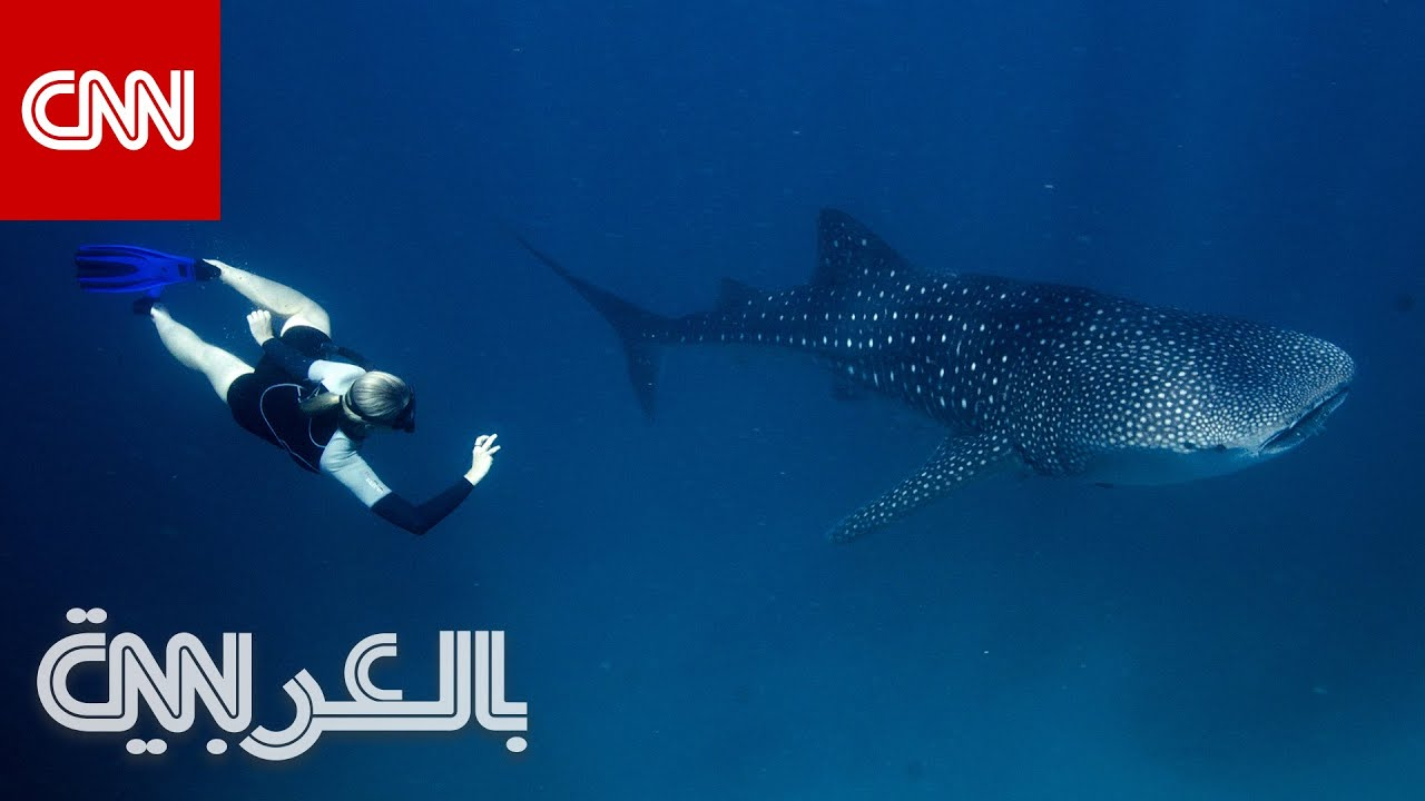 تكنولوجيا من -ناسا- تساعد في حماية أكبر أسماك القرش في العالم  - 21:00-2021 / 2 / 23