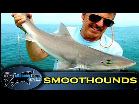 How To Catch SmoothHounds - The Totally Awesome Fishing Show