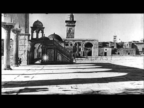 Camels caravan in the deserts of Jerusalem. HD Stock Footage