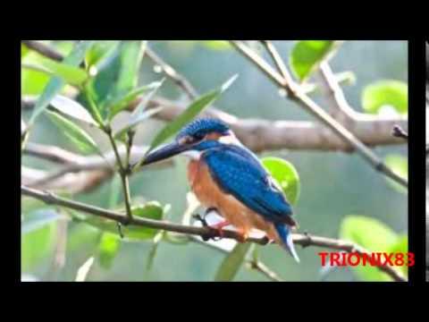 Aves exoticas del mundo en imagenes algunos de los pajaros - Fotos de los cuartos mas bonitos del mundo ...