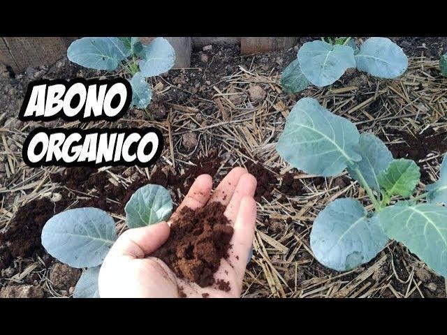 Potente Abono Casero Para Nuestras Plantas Experimentos Youtube