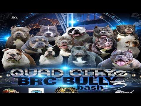 AMERICAN BULLY DOG SHOW FEB 16TH DAVENPORT,IOWA BRC GLOBAL