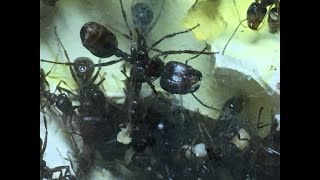 Жизнь муравьёв в огромном формикарии