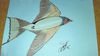 Como dibujar una golondrina sencilla, How to draw a simple swallow, Como desenhar uma andorinha